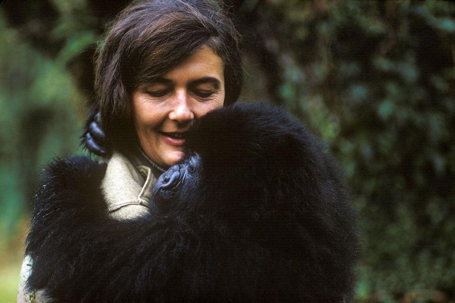 Em 1967, Dian Fossey mudou-se para a República Democrática do Congo, para começar sua pesquisa sobre …
