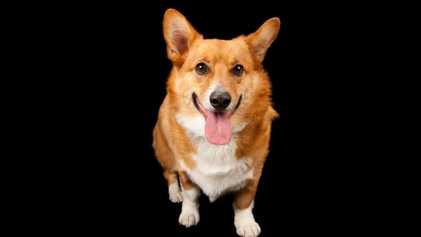 Seus cães sabem como você se sente – veja como