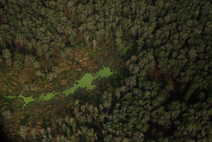 Vista aérea das árvores nas Montanhas Cardamomo no Camboja.