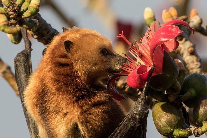 Os cientistas que entraram com um processo na justiça para impedir a morte dos morcegos ameaçados ...