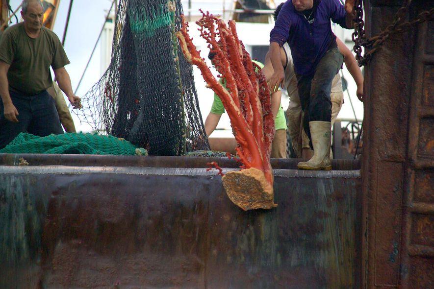 A pesca de arrasto é uma das práticas de pesca mais destrutivas. É comum que o ...