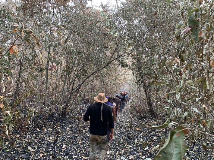 Os kuikuro montaram uma brigada de voluntários para combater o fogo em suas terras, cuja fumaça ...