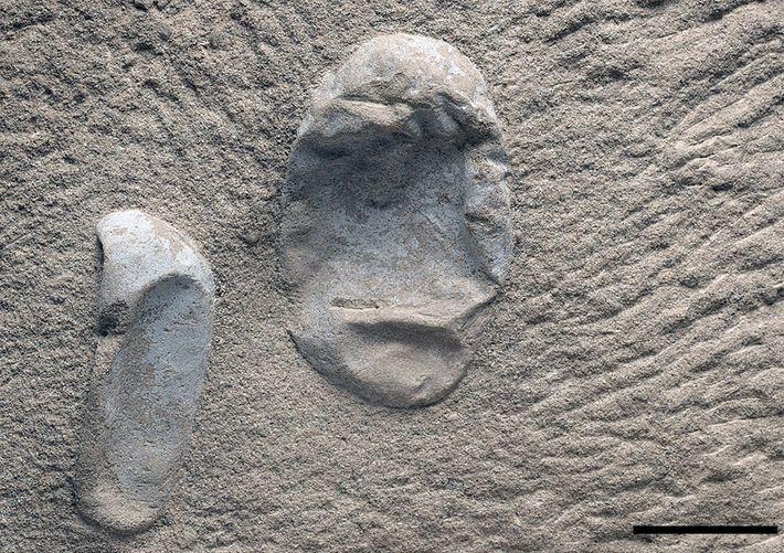 Dois dos recém-encontrados ovos de pterossauro. Paleontólogos dizem que encontraram centenas de ovos até agora, incluindo ...