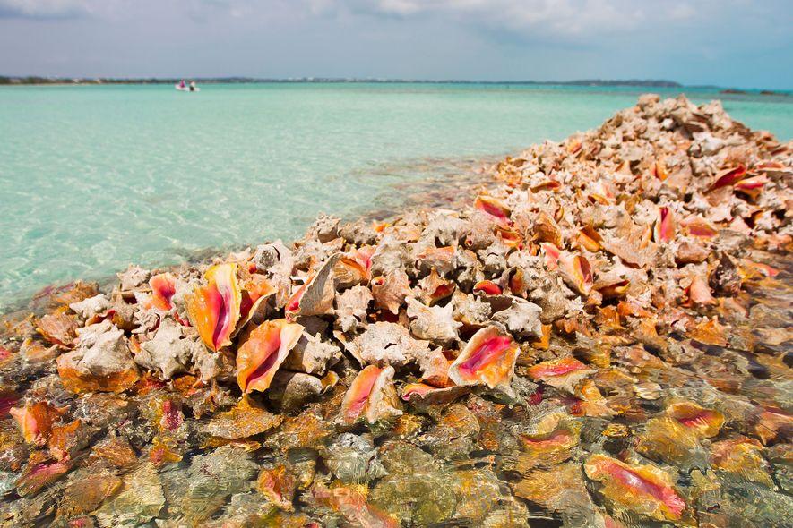 Pilhas de conchas são deixadas para trás por aqueles que as pescam apenas para coletar a ...