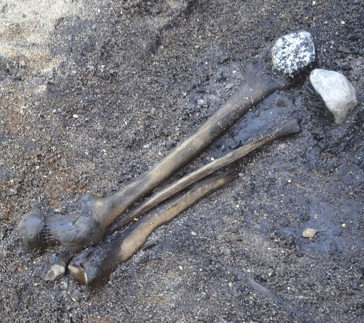 Ossos de pernas foram coletados do campo de batalha e organizados no pântano junto com pedras ...