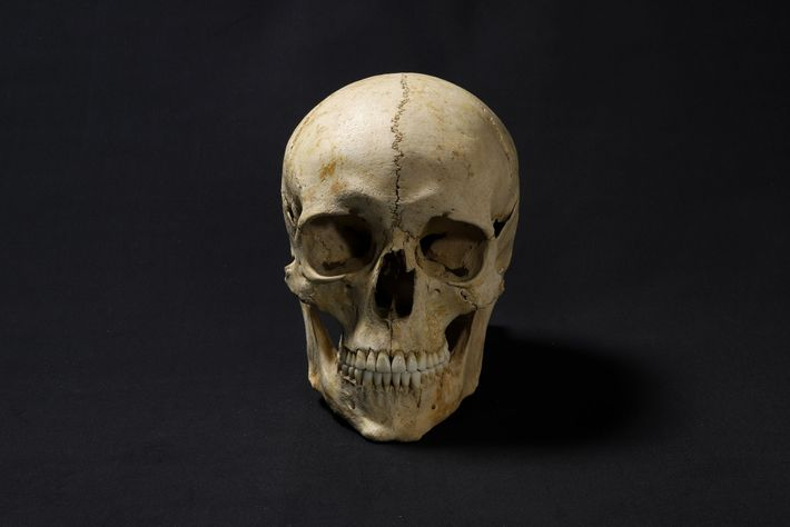 Uma cópia 3D de seu crânio foi utilizada como base para a reconstrução facial. Adelasius tinha ...