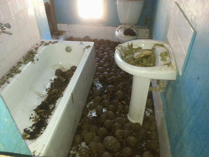 Reabilitação das tartarugas