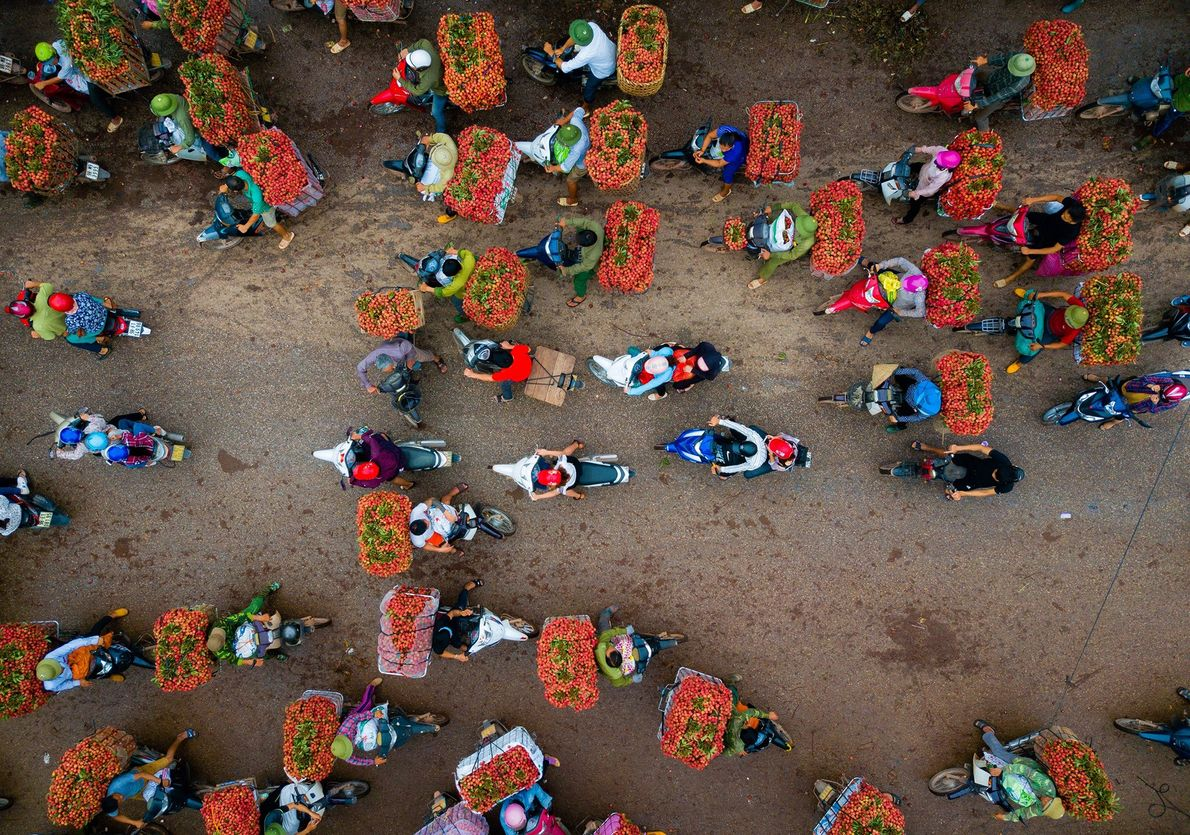 Agricultores vendem lichias, colhidas todo mês de junho no Vietnã.