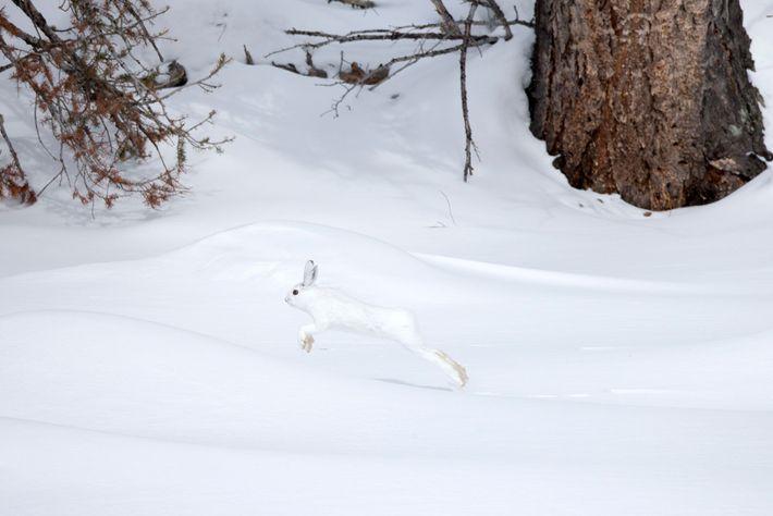 troca-de-pelagem-animais-brancos-neve