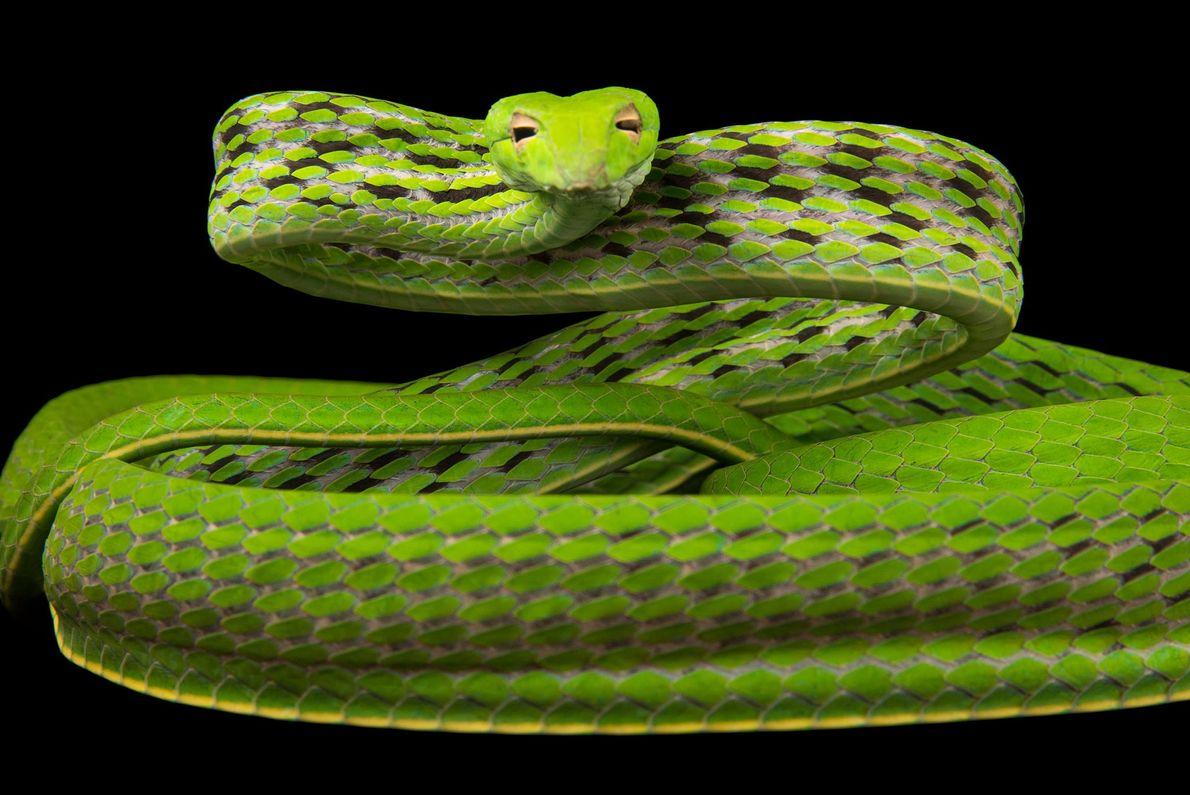 especies-de-cobras