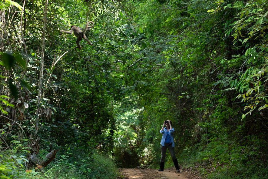 Em uma das estradas que cortam a RPPN Feliciano Miguel Abdala, Karen Strier observa com seus ...