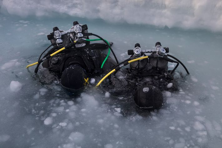 Scientist test the water before diving in Daneborg, Greenland. Once submerged, they'll collect organisms living at ...