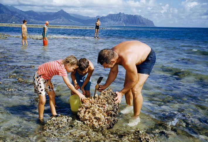 Um zoologista e seus filhos procuram criaturas marinhas.