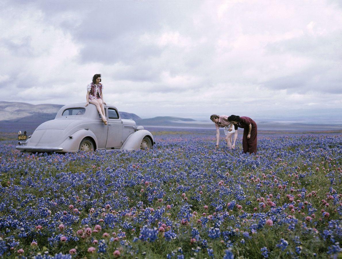 Primavera Califórnia