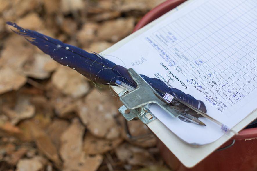 Nada passa desapercebido pelos pesquisadores do Instituto Arara-azul quando estão em campo. Planilha à mão, eles anotam dados de avistamentos e coletam penas e outros vestígios da espécie que vão encontrando pelo caminho.