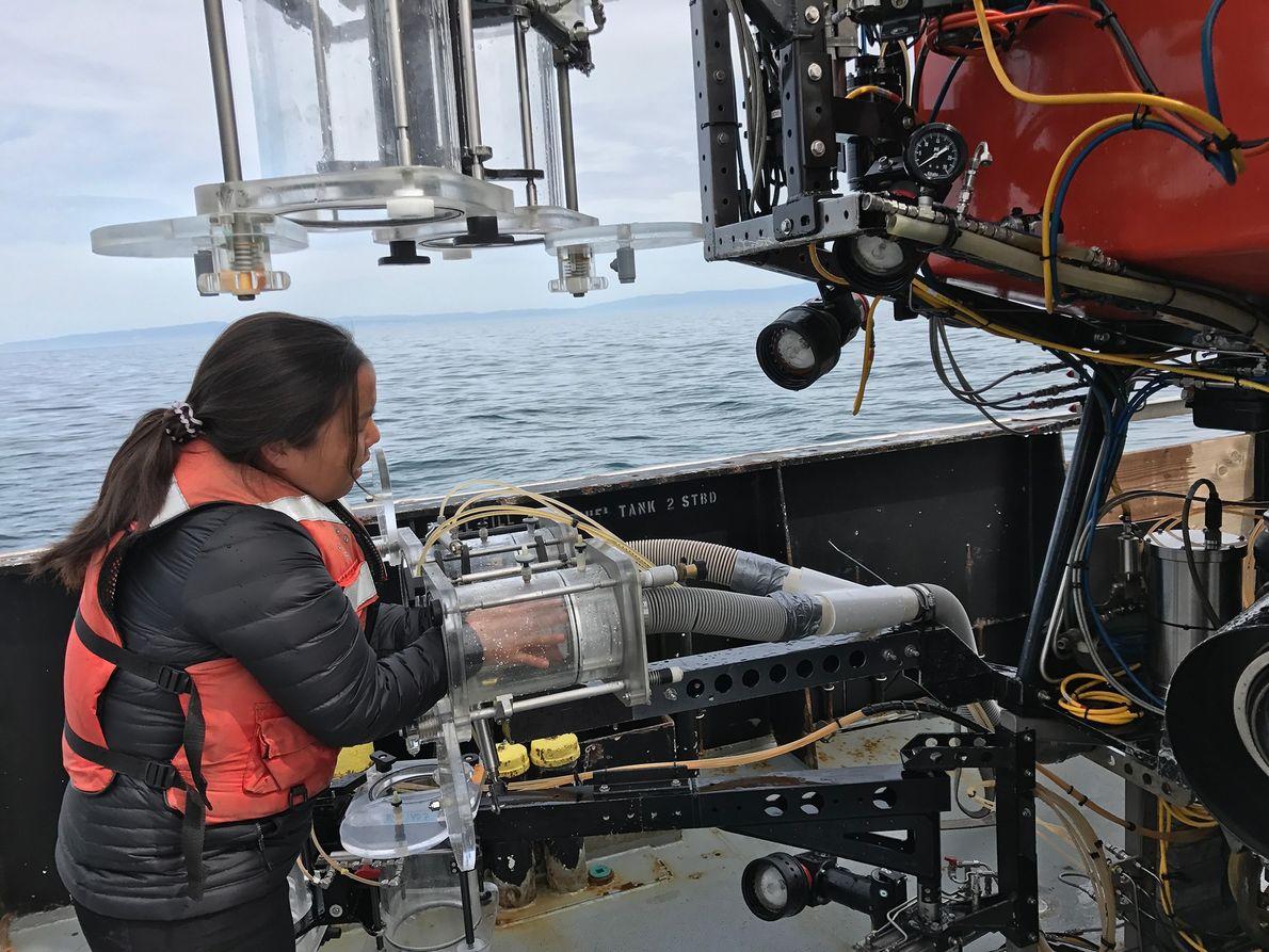 Anela Choy, professora de oceanografia do Scripps Institution of Oceanography em San Diego, foi a principal ...