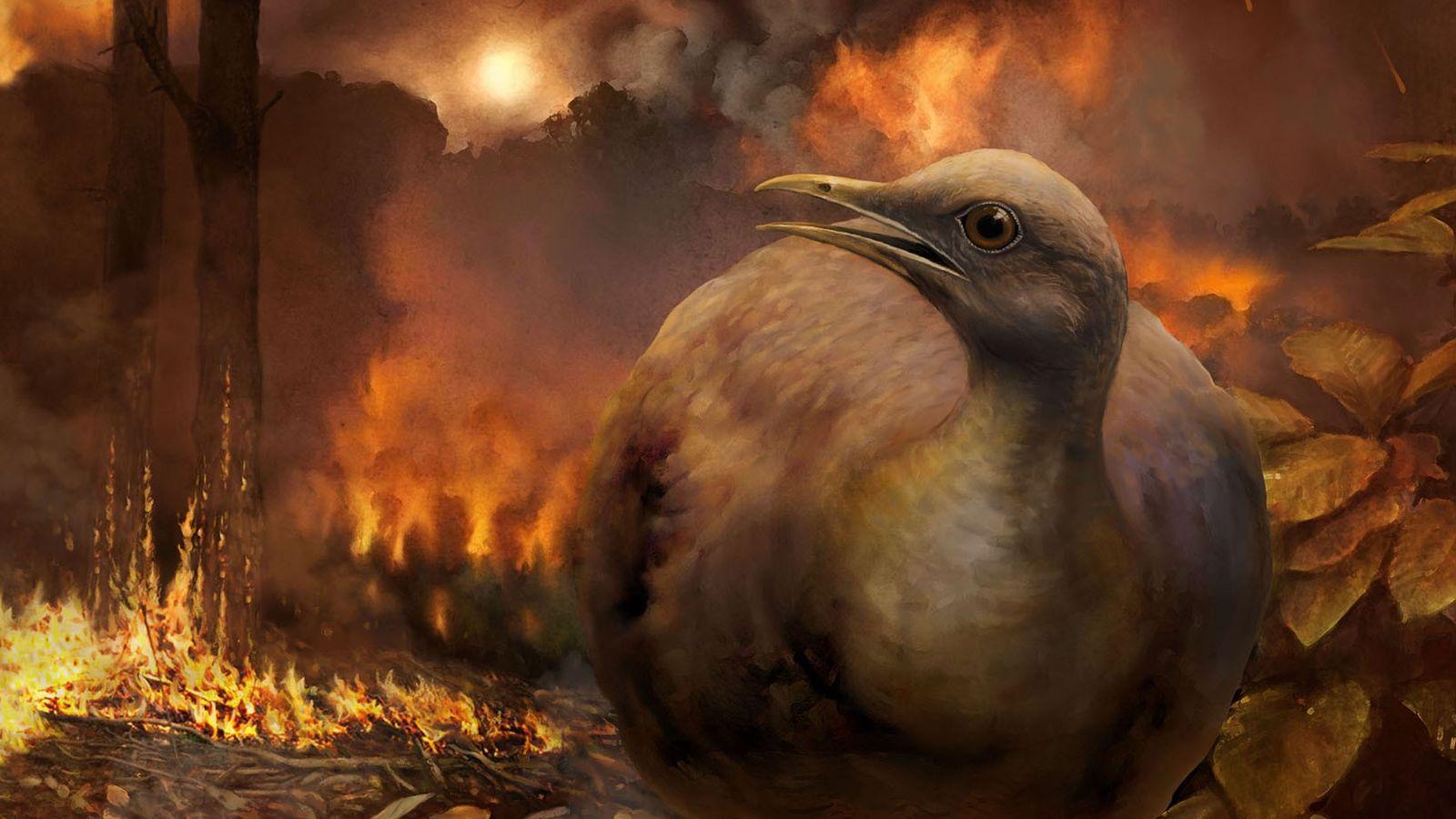 Uma ilustração mostra uma hipotética linhagem sobrevivente de aves, de pequeno porte e terrícola, fugindo de ...