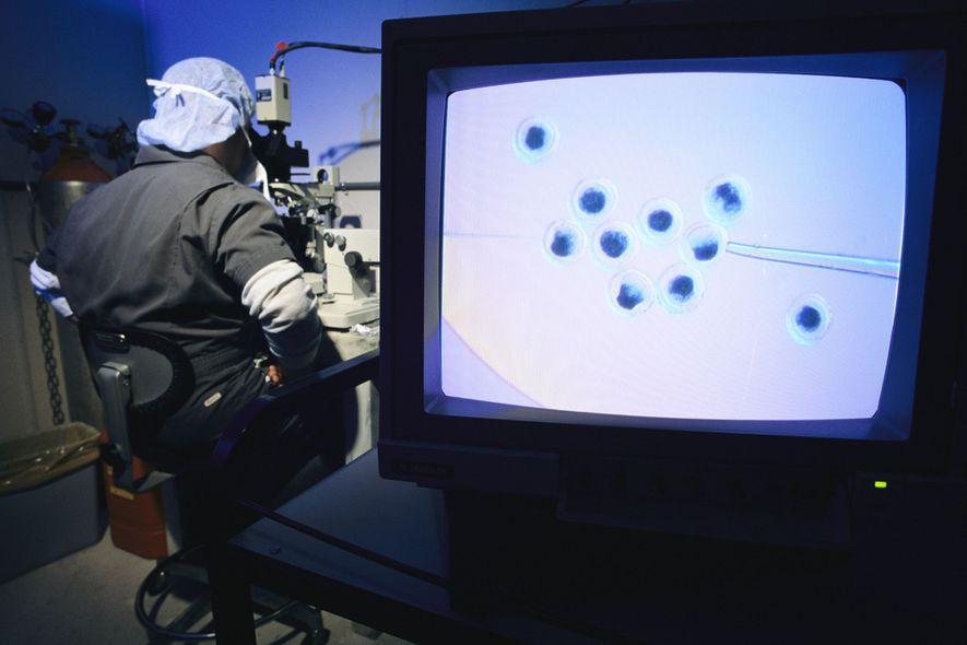 Um técnico de laboratório injeta DNA humano em óvulos de porco.