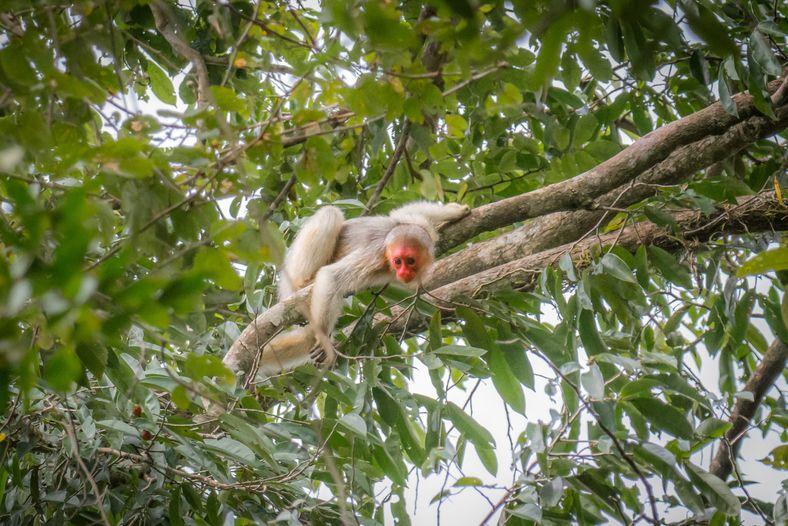 Além de fundamentais no ciclo da chuva, as florestas tropicais abrigam a maior biodiversidade do planeta ...