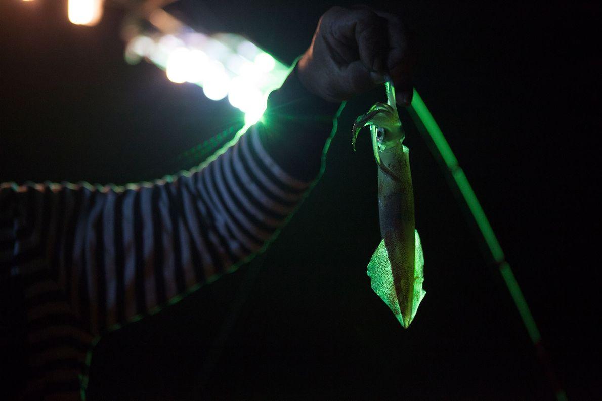 O estudo considerou a pesca de lula como uma das não-rentáveis, mas que recebem subsidio. Esse ...