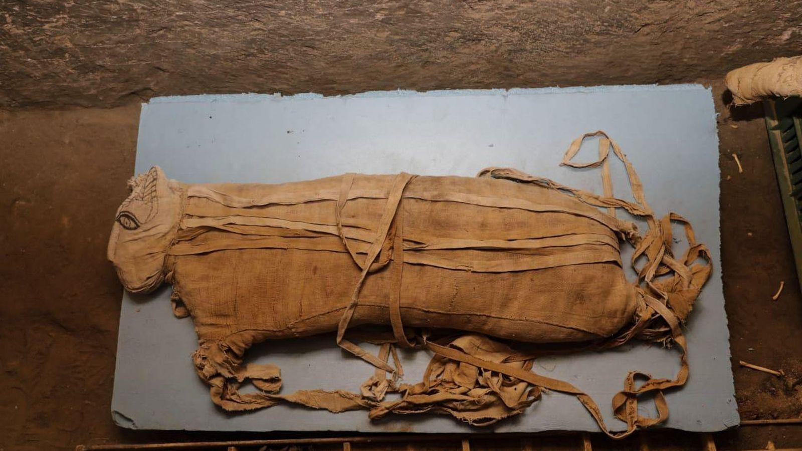 Este filhote de leão tinha cerca de oito meses quando foi mumificado. Até a declaração recente, ...