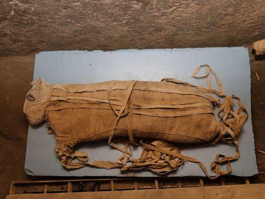 Múmias raríssimas de leão descobertas no Egito