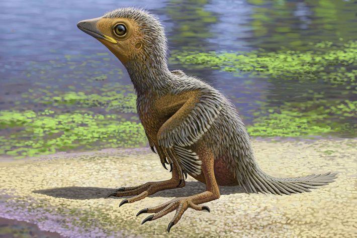 reconstrucao-fossil-de-ave