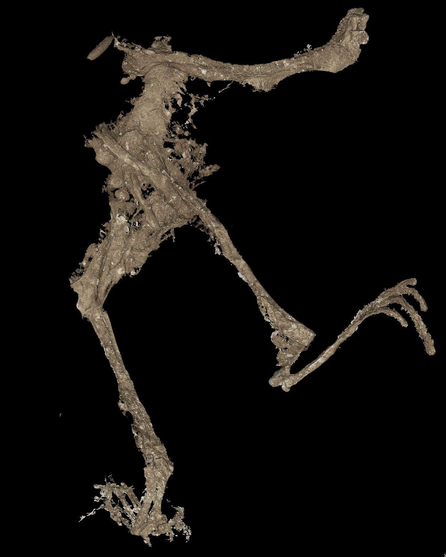 Uma varredura em 3D captura o corpo da rã em maiores detalhes.
