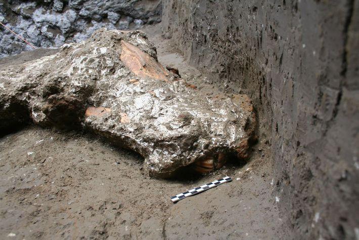 A evidência de um cabresto e rédea de couro decorada com ornamentos de metal foi encontrada ...