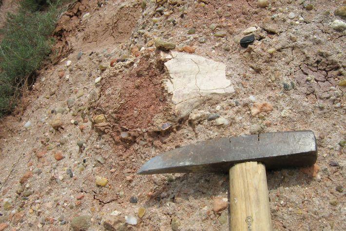 Um pedaço do pterossauro gigante conhecido como Drácula surge do afloramento rochoso em Sebes, na Romênia.