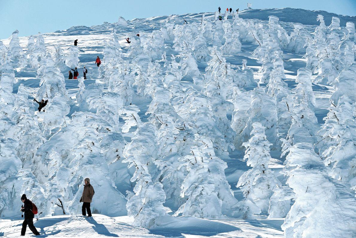 Tohoku, Japão Árvores cobertas de gelo, apelidadas de monstros da neve, transformam a estação de esqui Zao ...