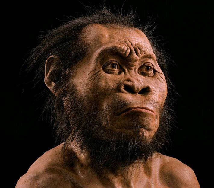 Homo naledi, novo ancestral humano