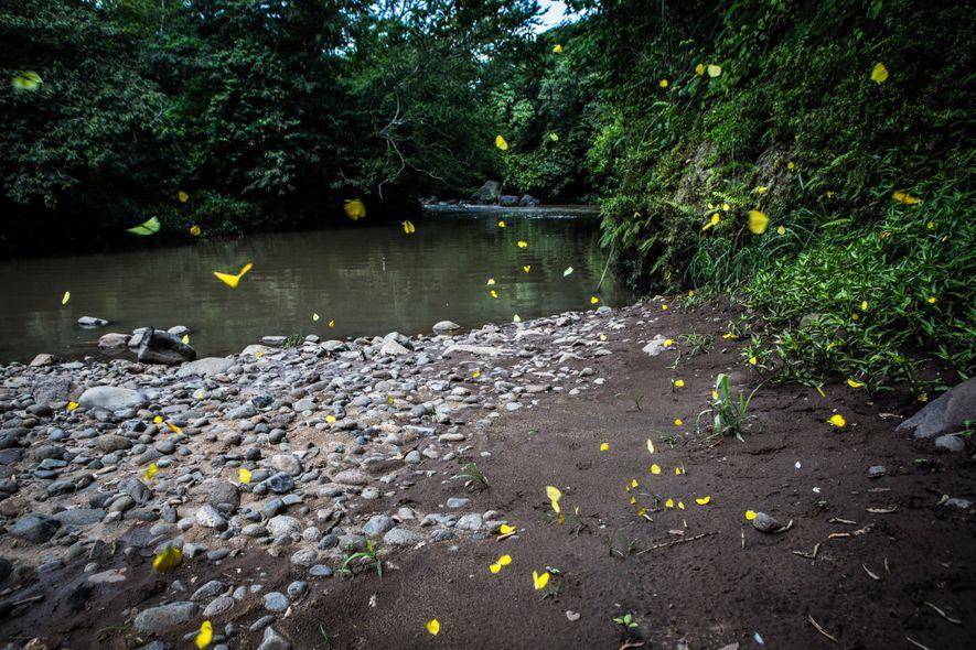 O Rio Pampe como está hoje. Em maio de 2016, nove mil galões de melaço foram ...