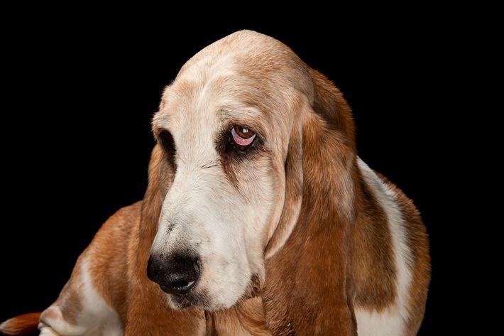 galeria-de-cachorros-domesticos