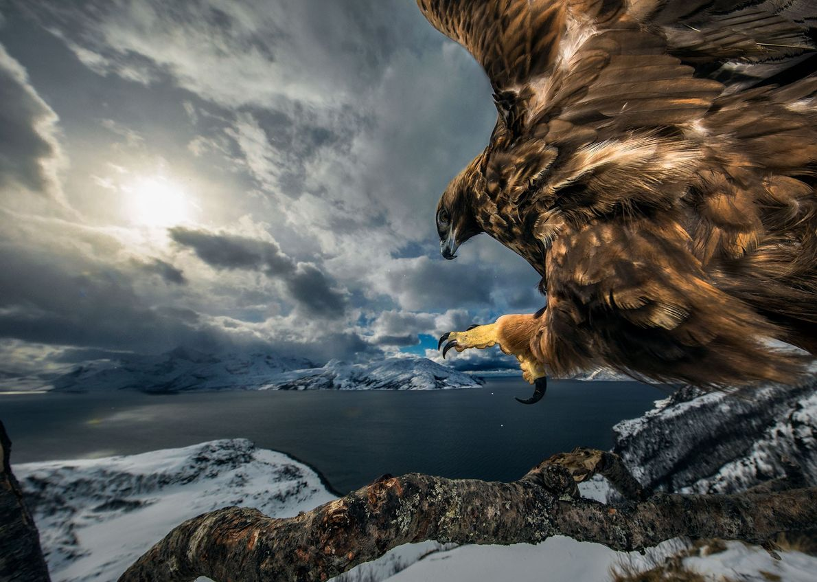 """O fotógrafo norueguês Audun Rikardson venceu a categoria """"comportamento de aves"""" com esta imagem de armadilha ..."""