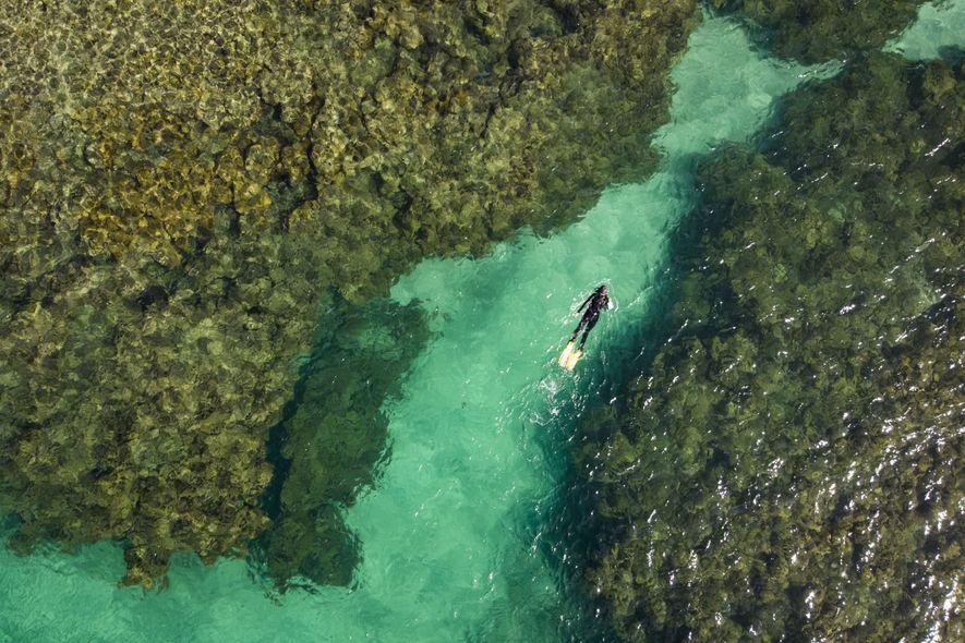 Beatrice mergulha na Zona de Preservação de Vida Marinha de Tamandaré. Depois de sofrer com sobrepesca ...