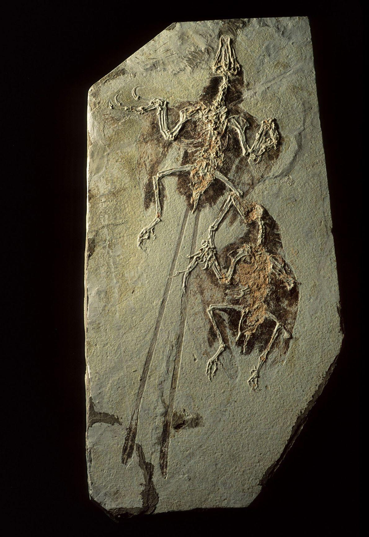 Os depósitos fósseis de Liaoning, na China, não apenas preservam os dinossauros, mas também os primeiros ...