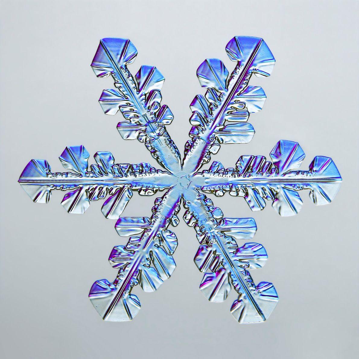 As diversas facetas hexagonais de um floco de neve brilham em azul e roxo devido à …