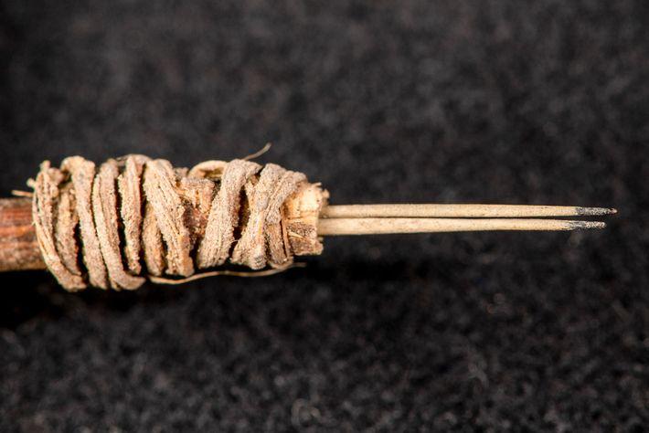 Os arqueólogos precisaram de um ano de pesquisa para determinar se o ramo de espinhos de ...