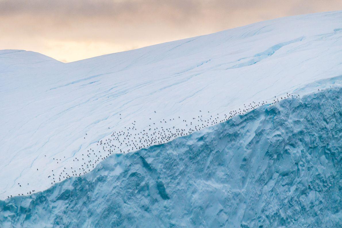 aves-geleira-groenlandia