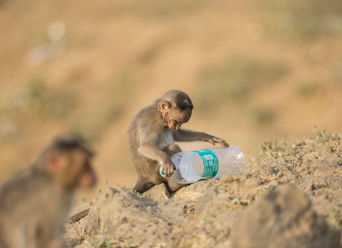 Em todo o mundo, cerca de um milhão de garrafas plásticas são vendidas por minuto.