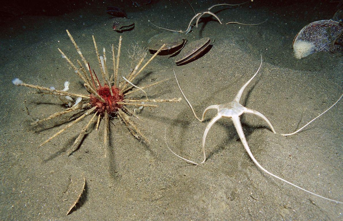 A Antártida é um destino popular para cientistas que investigam oceanos estranhos. As espessas camadas de ...