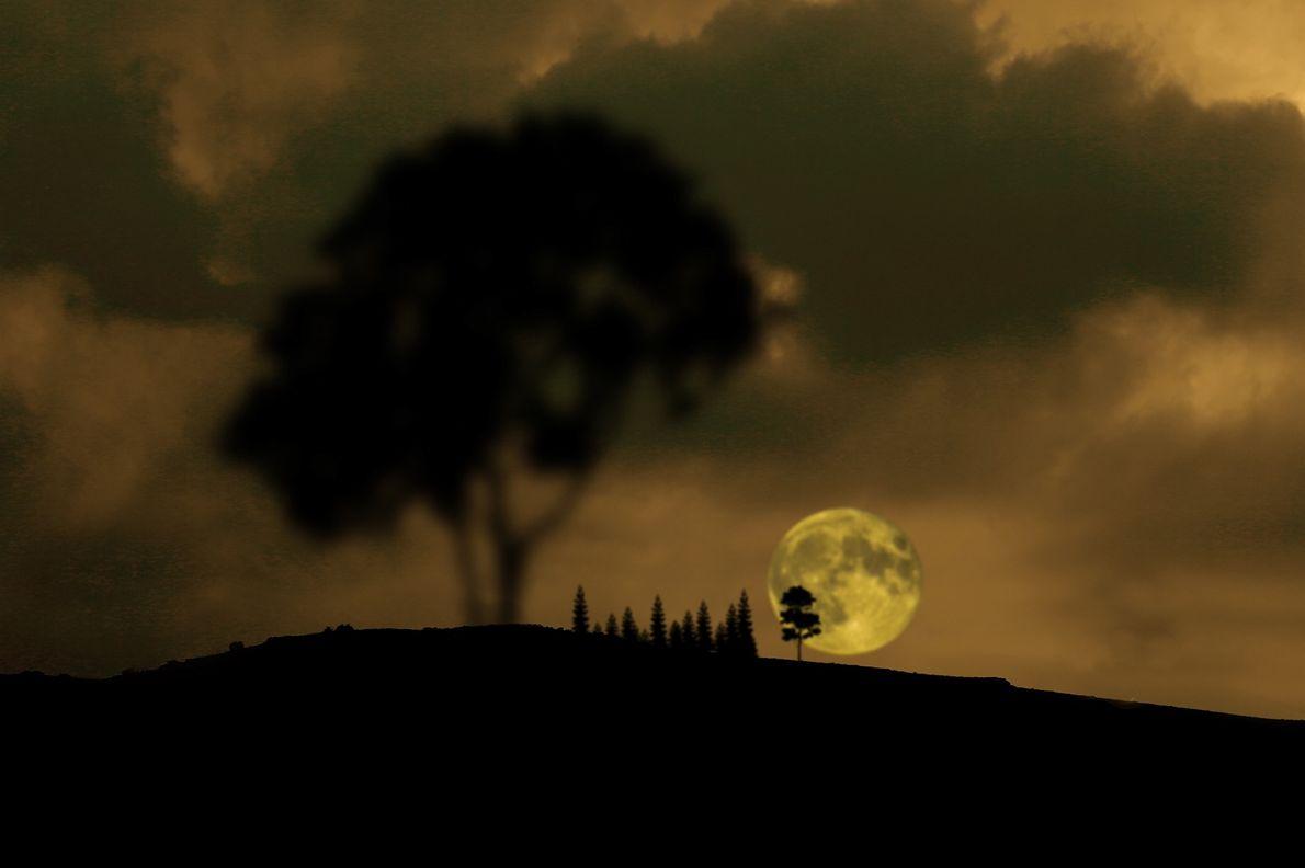 Pinheiros adornam a paisagem junto à Lua cheia em Konya, na Turquia, antes do eclipse do ...