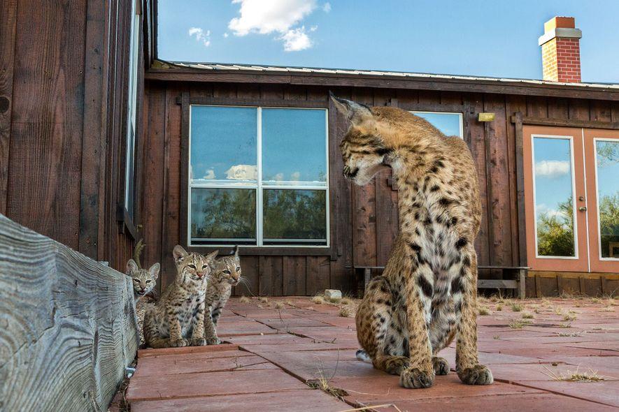 A mãe cuidava muito bem de seus filhotes, ensinando-os coisas novas a cada dia.