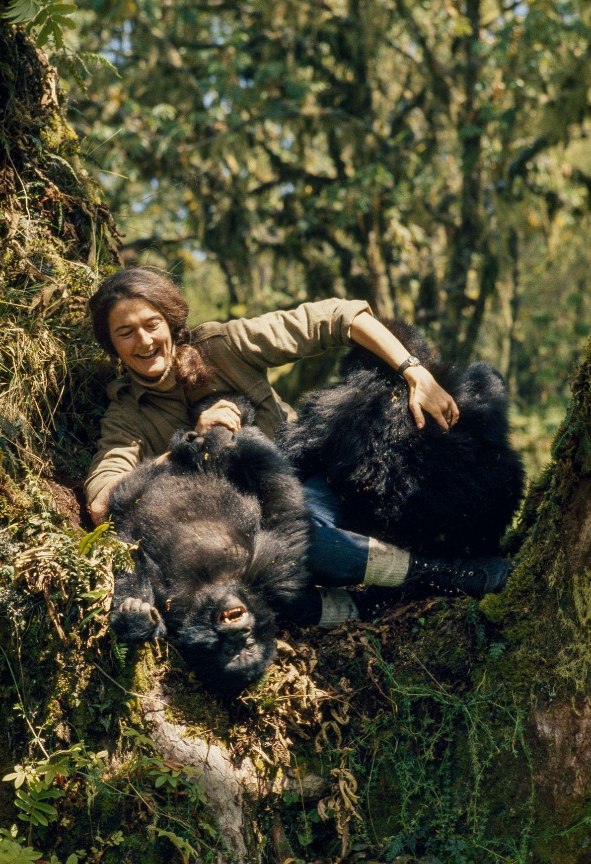 Com sua abordagem prática e ativa da conservação, Fossey mudou a forma pela qual os ameaçados ...