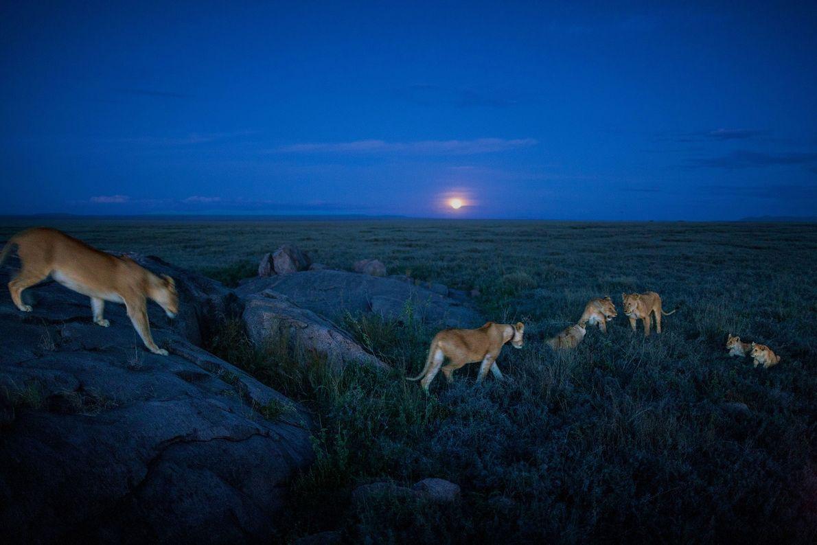Membros do bando Vumbi partem em uma caçada noturna.