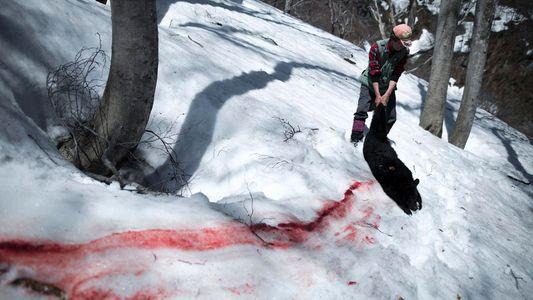 A tradicional caça de ursos do Japão é sagrada – e controversa