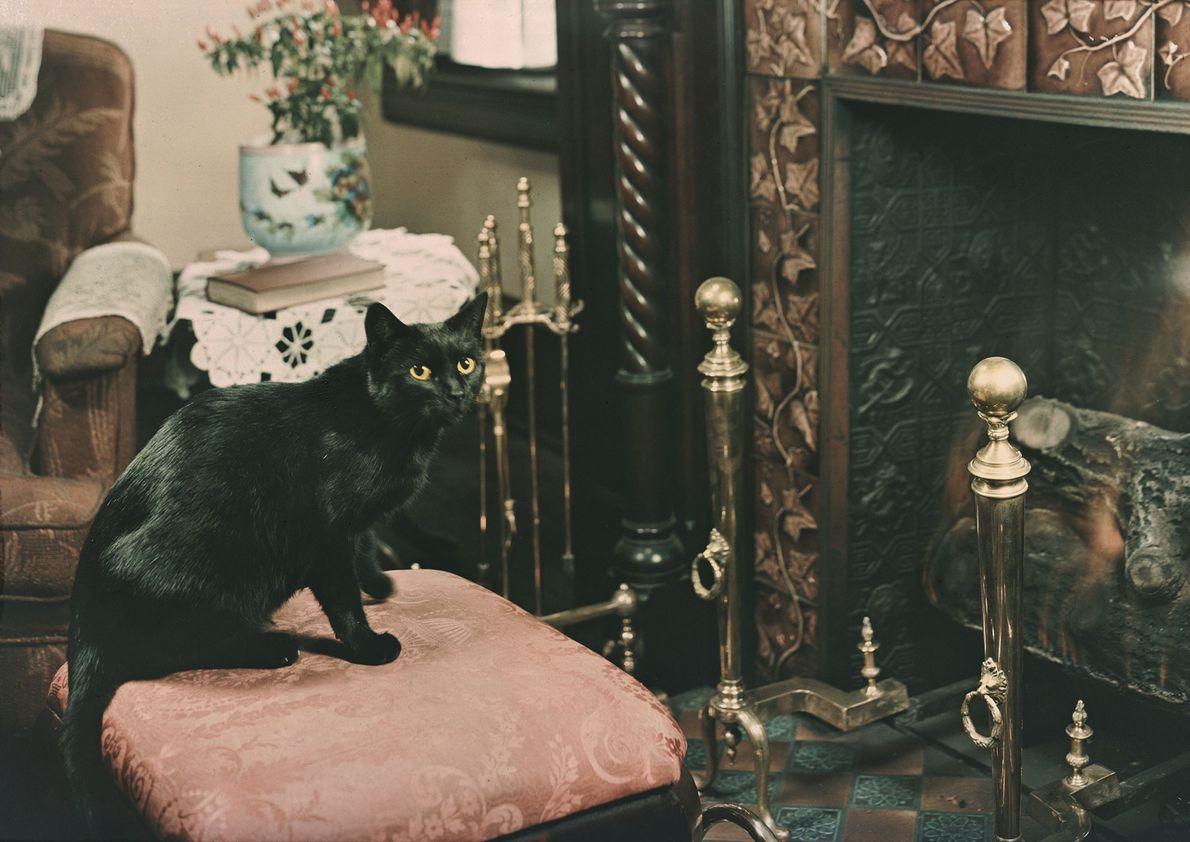 Midnight, um gato preto de pelagem curta, sentado em frente à lareira, em Washington, D.C. Culver ...