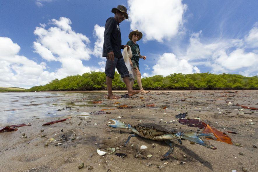 Beatrice e o pescador Seu Neco caminham em área de mangue próxima de Tamandaré. Seu Neco ...