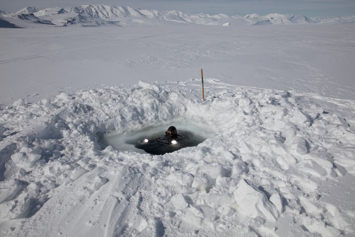 In addition to collecting samples, divers anchor hydrophones under the ice to record the sound of ...